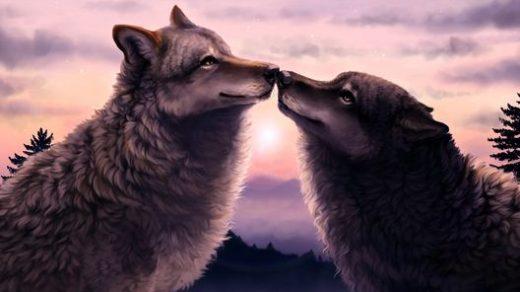 Очень красивые картинки волка и волчицы - подборка изображений 11