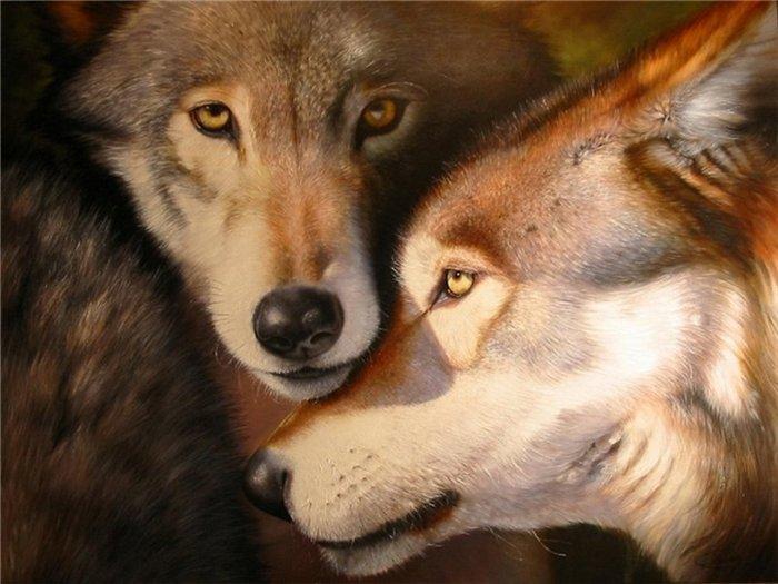 Очень красивые картинки волка и волчицы - подборка изображений 13