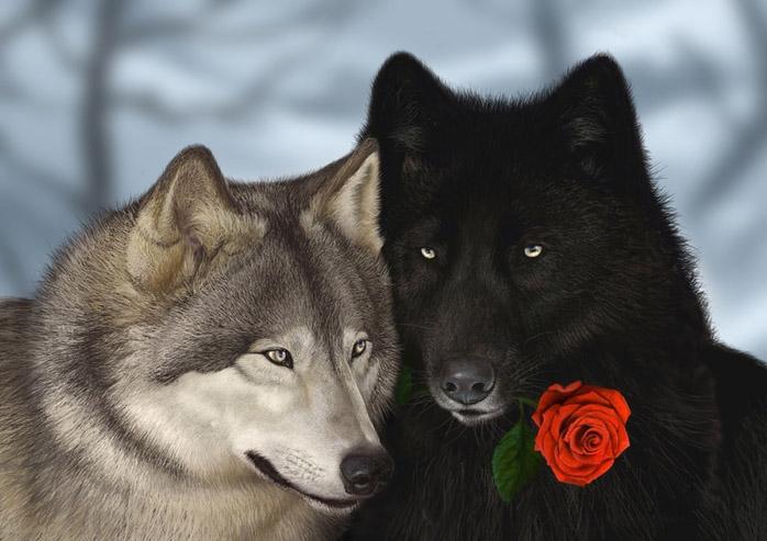Очень красивые картинки волка и волчицы - подборка изображений 2