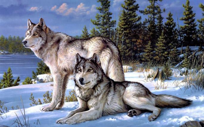 Очень красивые картинки волка и волчицы - подборка изображений 8