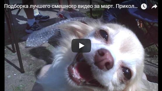 Очень смешные видео, чтобы посмеяться от души - подборочка