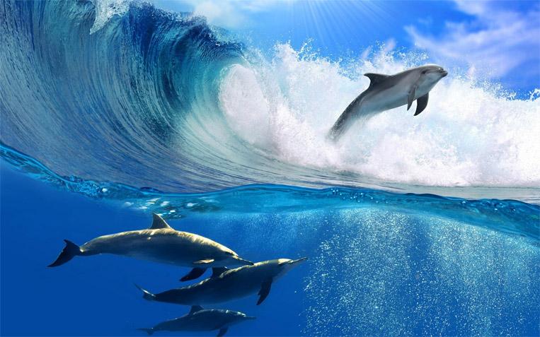 Прикольные и красивые картинки, фото дельфинов в море - подборка 1