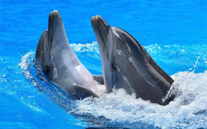 Прикольные и красивые картинки, фото дельфинов в море - подборка 10