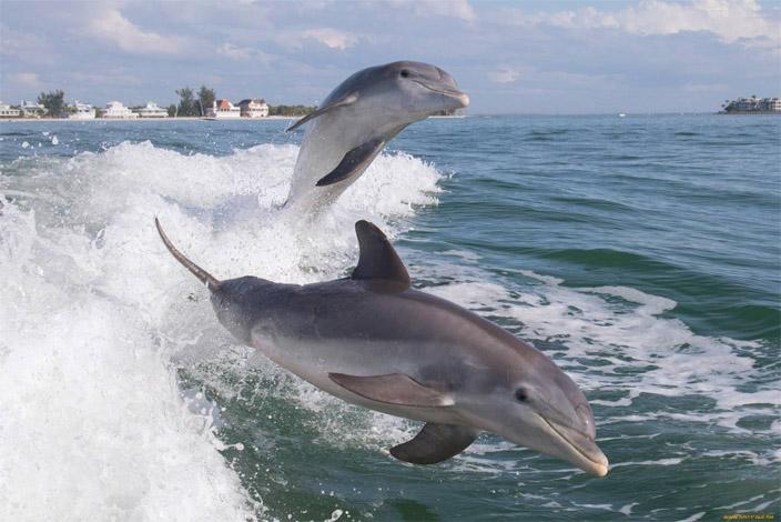 Прикольные и красивые картинки, фото дельфинов в море - подборка 13