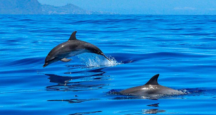 Прикольные и красивые картинки, фото дельфинов в море - подборка 5
