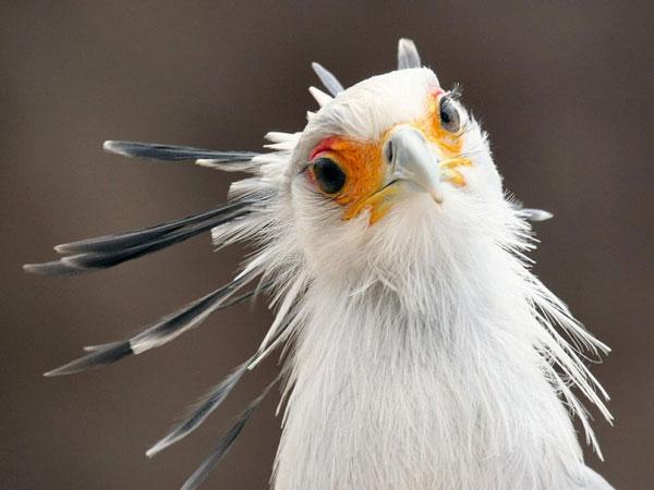 Смешные и прикольные картинки про птиц, птичек, забавная сборка 10