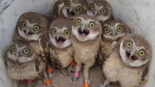 Смешные и прикольные картинки про птиц, птичек, забавная сборка 11