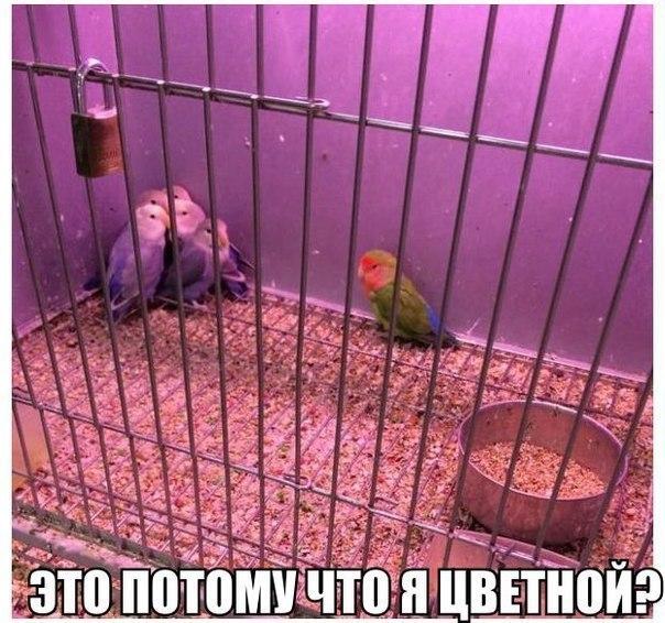 Смешные и прикольные картинки про птиц, птичек, забавная сборка 12