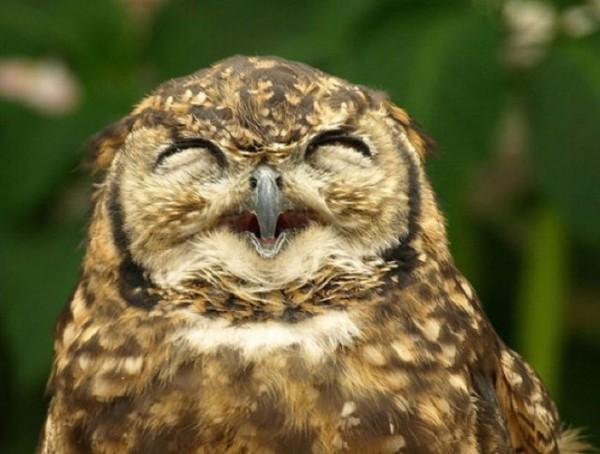 Смешные и прикольные картинки про птиц, птичек, забавная сборка 5