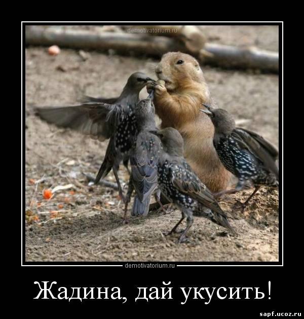 Смешные и прикольные картинки про птиц, птичек, забавная сборка 6