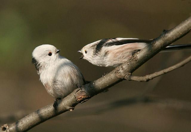 Смешные и прикольные картинки про птиц, птичек, забавная сборка 7