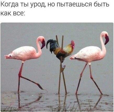 Смешные и прикольные картинки про птиц, птичек, забавная сборка 8