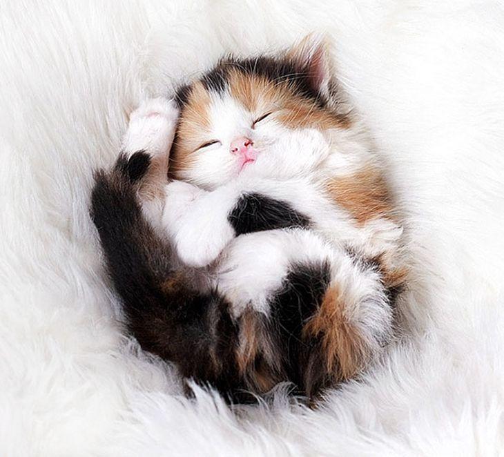 Фото и картинки милых котят и котенков - подборка 2018 12