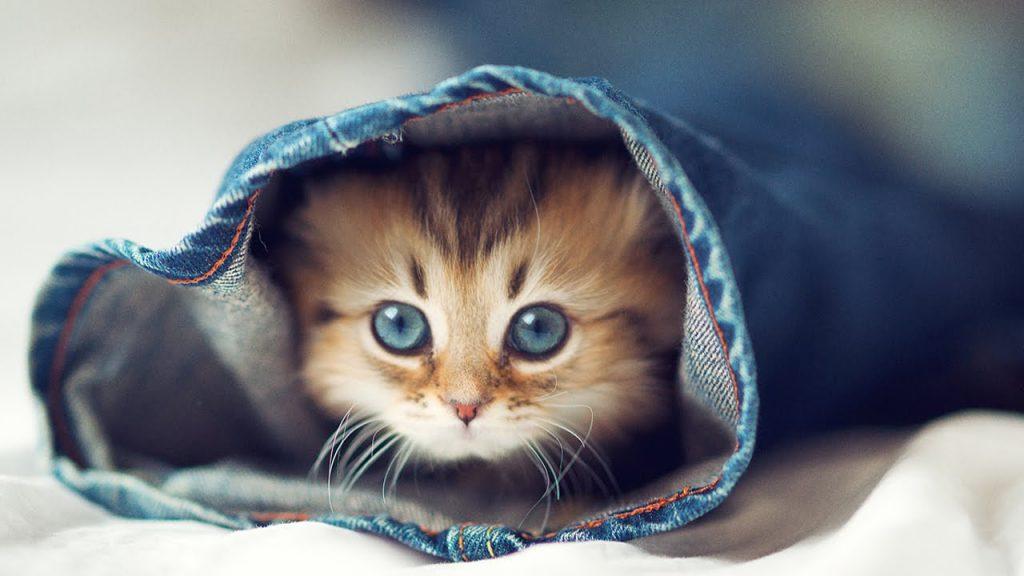 Фото и картинки милых котят и котенков - подборка 2018 13