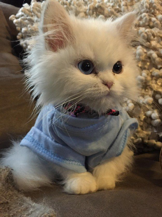 Фото и картинки милых котят и котенков - подборка 2018 14
