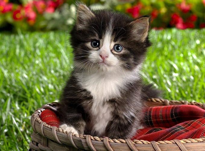 Фото и картинки милых котят и котенков - подборка 2018 4