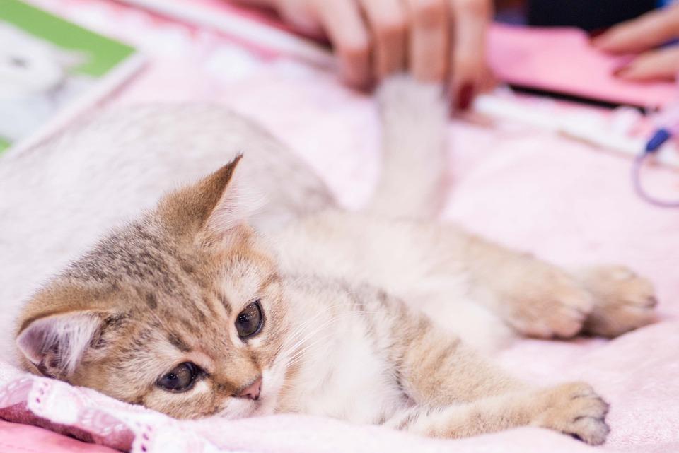 Фото и картинки милых котят и котенков - подборка 2018 8