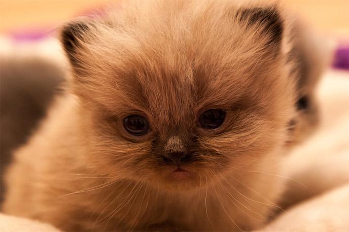 Фото и картинки милых котят и котенков - подборка 2018 9