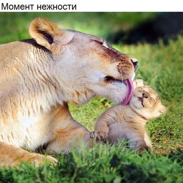 Забавные картинки с животными - очень красивые и смешные 8