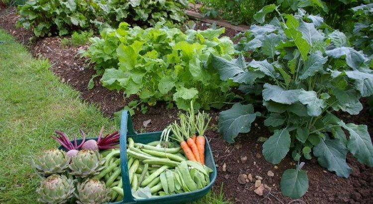 Какие овощи можно сажать в тени - основные секреты и хитрости 2
