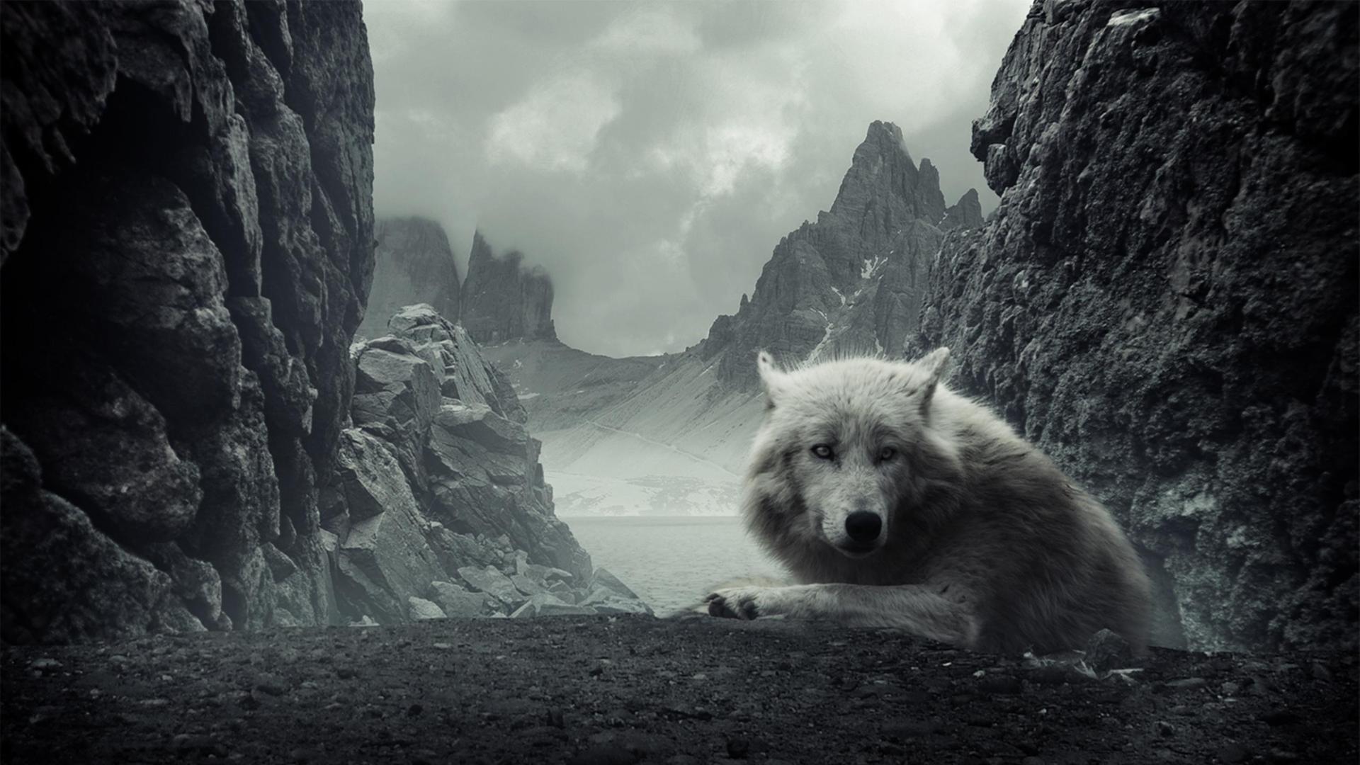 Классные картинки на рабочий стол волки, волчица, волк - подборка 8