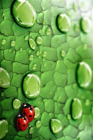Красивые и необычные картинки на телефон Дождь - подборка 19