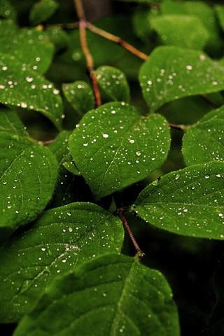 Красивые и необычные картинки на телефон Дождь - подборка 2