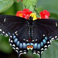 Красивые картинки и обои на рабочий стол Бабочки, Мотыльки 11