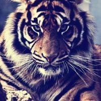 Красивые картинки на аву животные и зверюшки - милая подборка 18