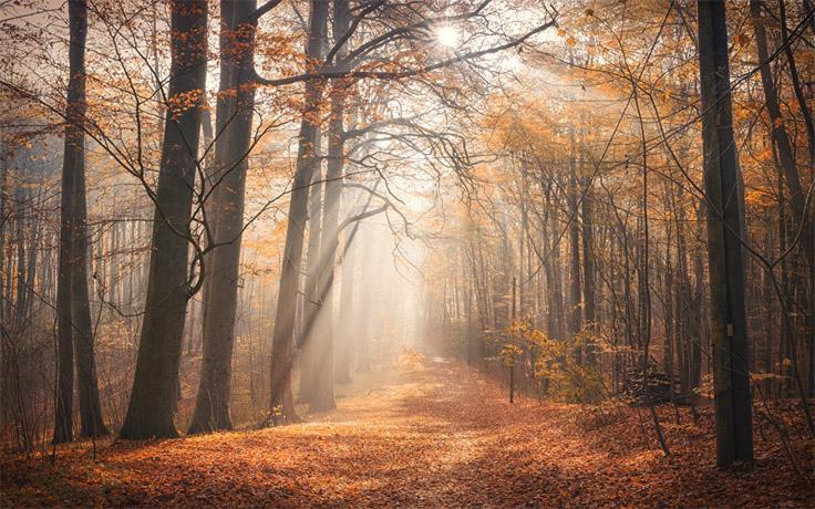 Осеннее утро, утро осенью - красивые и невероятные картинки 1