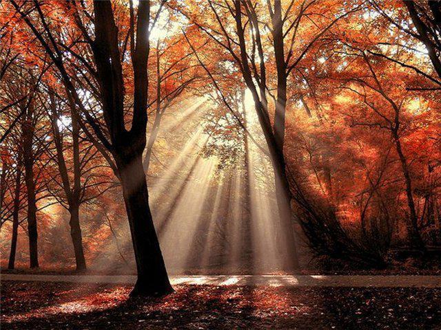 Осеннее утро, утро осенью - красивые и невероятные картинки 15