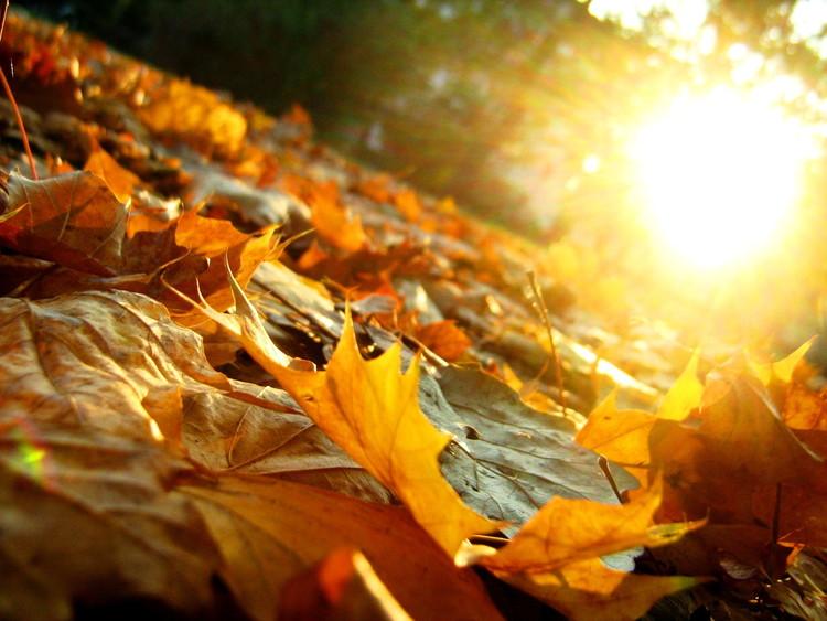 Осеннее утро, утро осенью - красивые и невероятные картинки 2