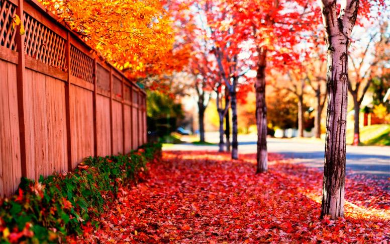 Осеннее утро, утро осенью - красивые и невероятные картинки 6