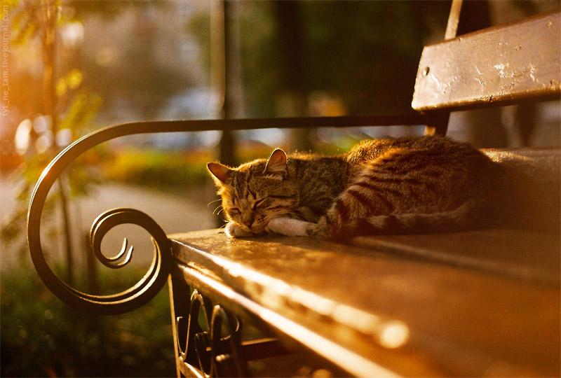 Осеннее утро, утро осенью - красивые и невероятные картинки 9