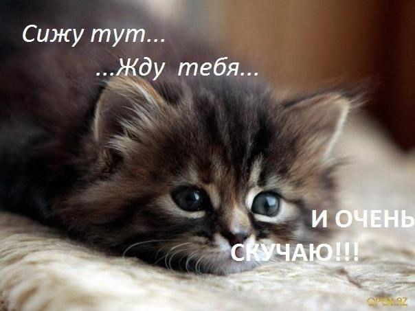 Подборка смешных и ржачных картинок про животных - сборка №82 12