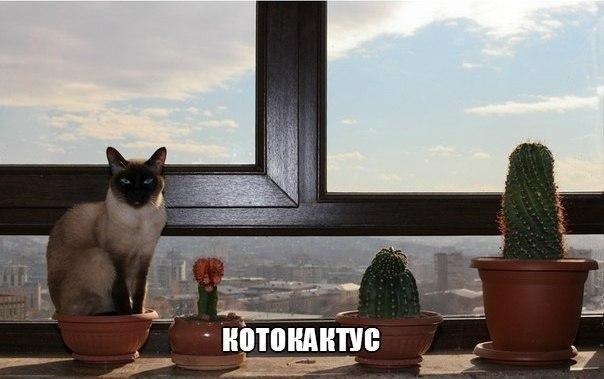 Подборка смешных и ржачных картинок про животных - сборка №82 13