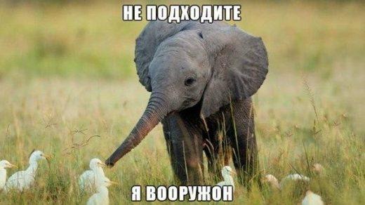 Подборка смешных и ржачных картинок про животных - сборка №82 14