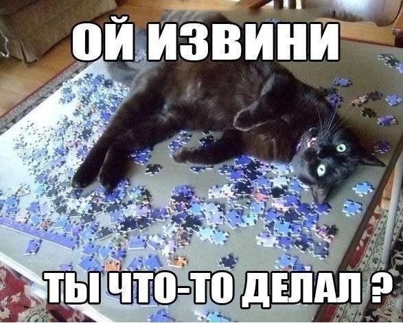 Подборка смешных и ржачных картинок про животных - сборка №82 2