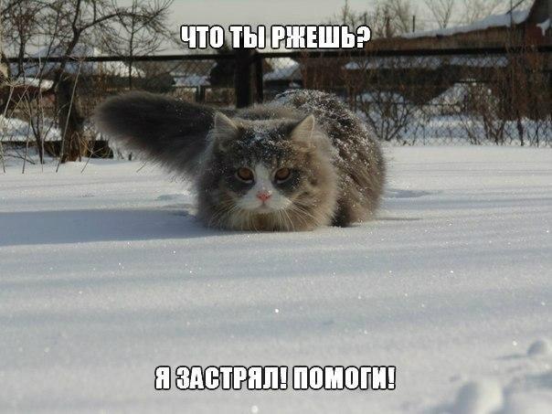 Подборка смешных и ржачных картинок про животных - сборка №82 6