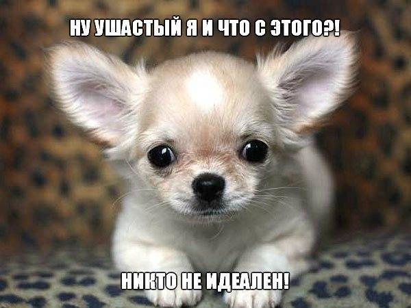 Подборка смешных и ржачных картинок про животных - сборка №82 9