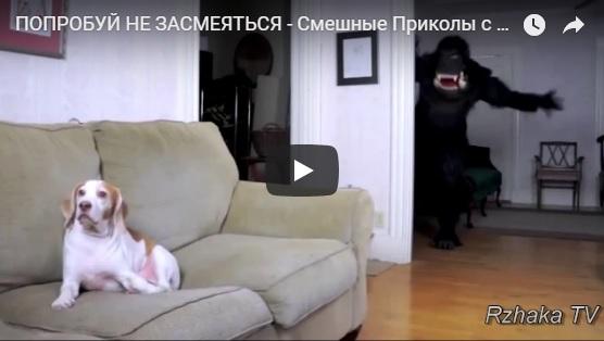 Ржачные видео приколы с людьми, детьми и животными - сборка №127