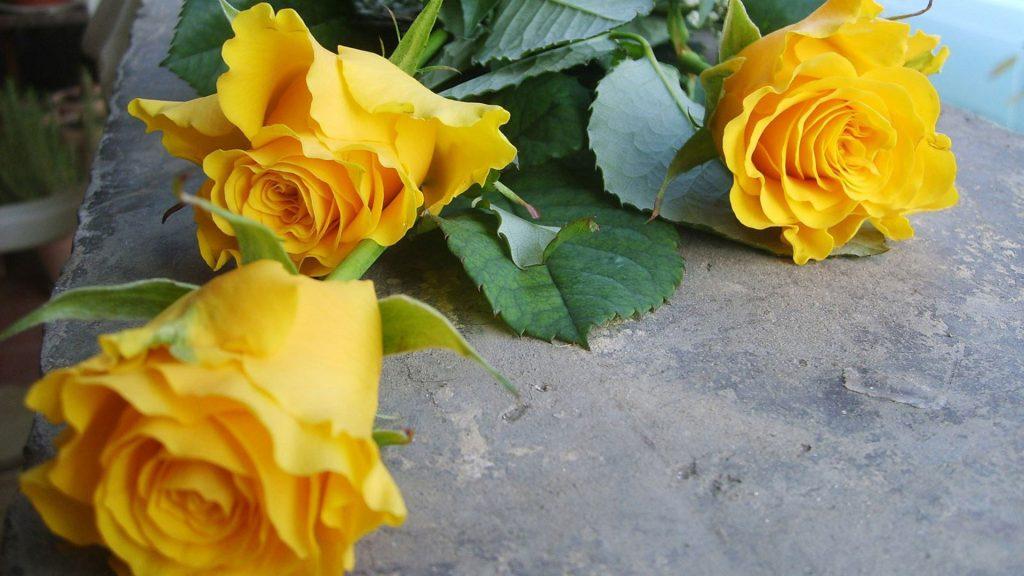 Удивительные картинки на рабочий стол Желтые розы - подборка 4