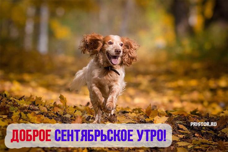 Доброе сентябрьское утро! - красивые картинки и открытки 1
