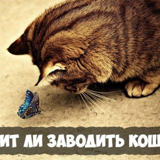 Кошка в качестве домашнего питомца стоит ли заводить кошку, преимущества 1