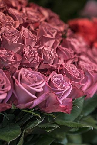 Красивые и милые картинки, обои розы для заставки телефона - сборка 1