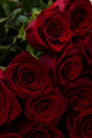 Красивые и милые картинки, обои розы для заставки телефона - сборка 17