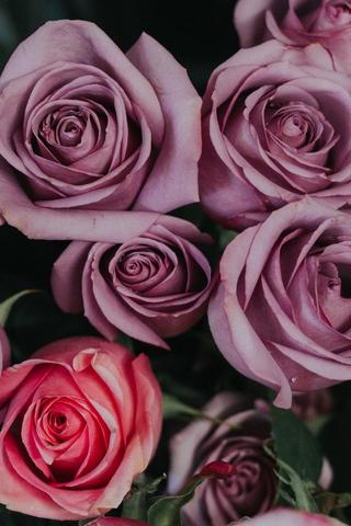 Красивые и милые картинки, обои розы для заставки телефона - сборка 18