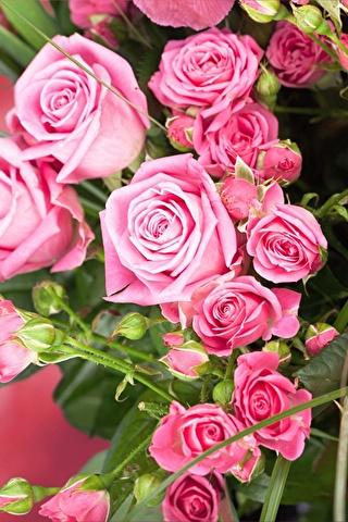 Красивые и милые картинки, обои розы для заставки телефона - сборка 3
