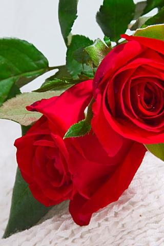 Красивые и милые картинки, обои розы для заставки телефона - сборка 5
