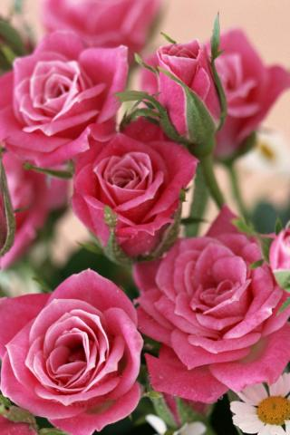 Красивые и милые картинки, обои розы для заставки телефона - сборка 8